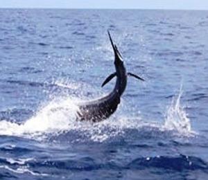Nassau Offshore Fishing