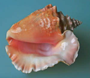 McLean's Town Annual Conch Cracking Festival