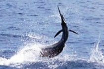 Bahamas Fishing Charters