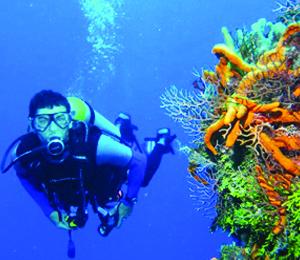 The Fantastic World of Bahamas Diving